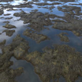 Tidal Pools 2 PBR Material